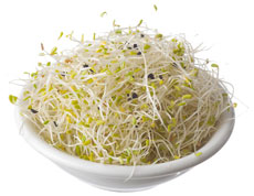 Alfalfa & Garlic Sprouts