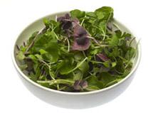 Micro Salad