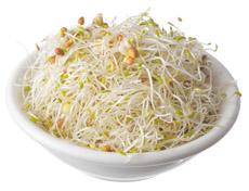 Alfalfa & Radish Sprouts
