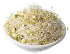 Alfalfa & Salad Sprouts
